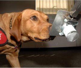 perros-diabetes-3