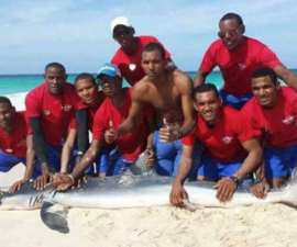 tiburon-foto-1