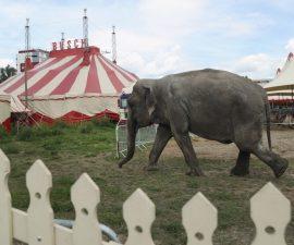 animales-circo-elefante