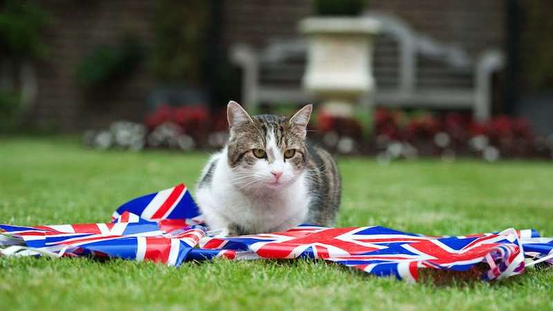 gato-larry-reino-unido-downing-street