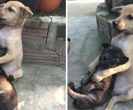 perritos-callejeros-amigos