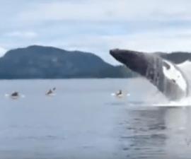 ballena-splash-kayaks