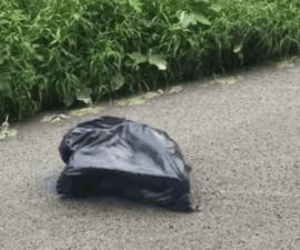 bolsa-basura-perrito