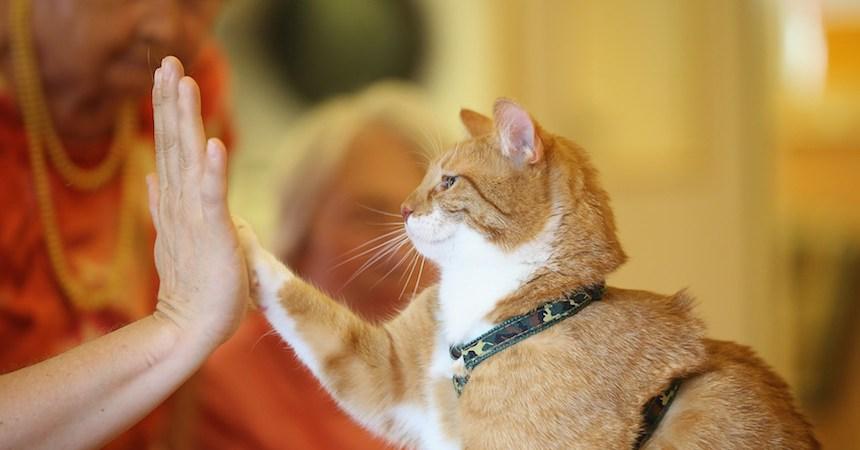 gato-amigo-mascota