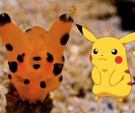 pikachu-nudibranch