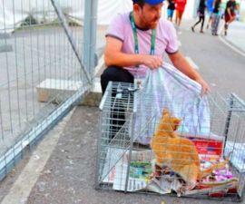 rescate-gatos-maracana-juegos-olimpicos