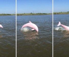 pinkie-delfin-rosado