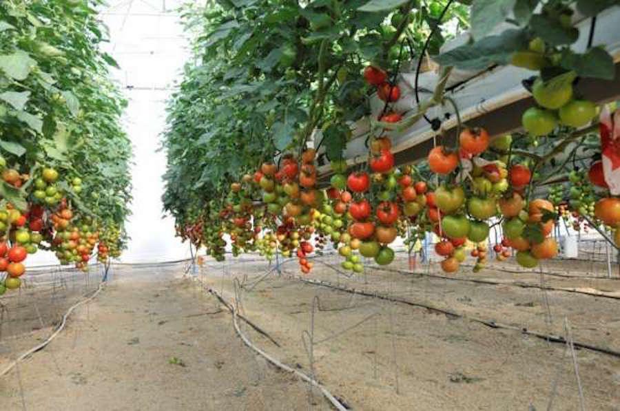 Cultivo de Frutas