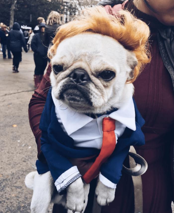 aaaww los mejores disfraces de halloween para perros