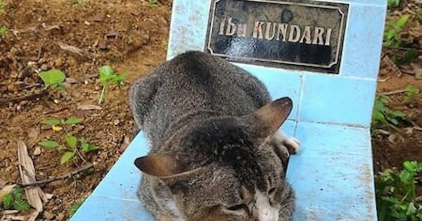 Un gato pasó un año en la tumba de su dueña
