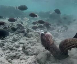 Anguila vs pulpo vs hombre