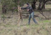 El tipo que le pegó a un canguro