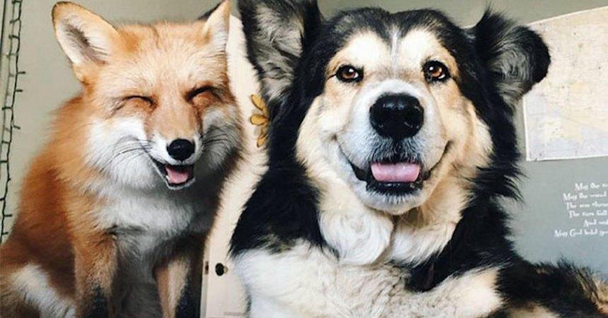 Perro y zorro - Mejores amigos
