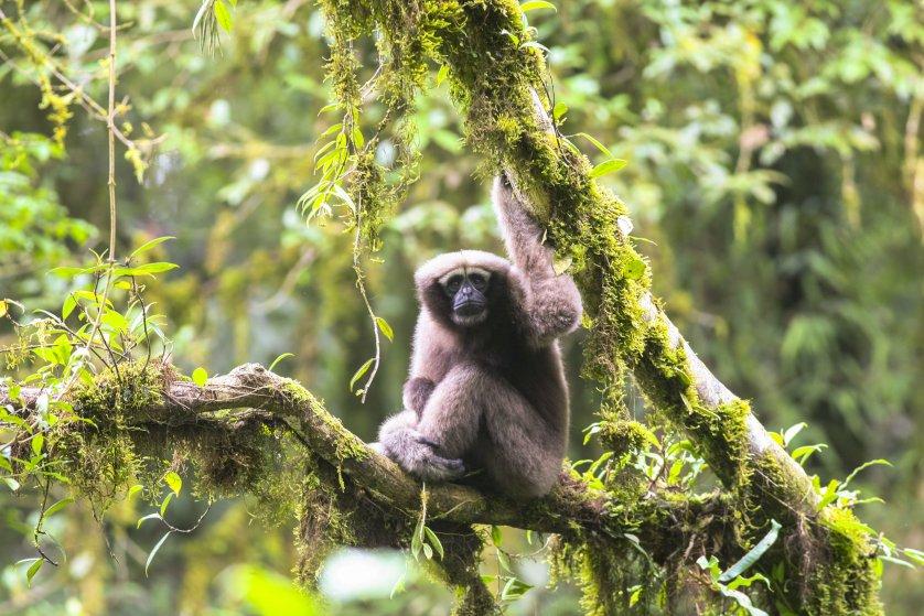 Lemur - John Cleese