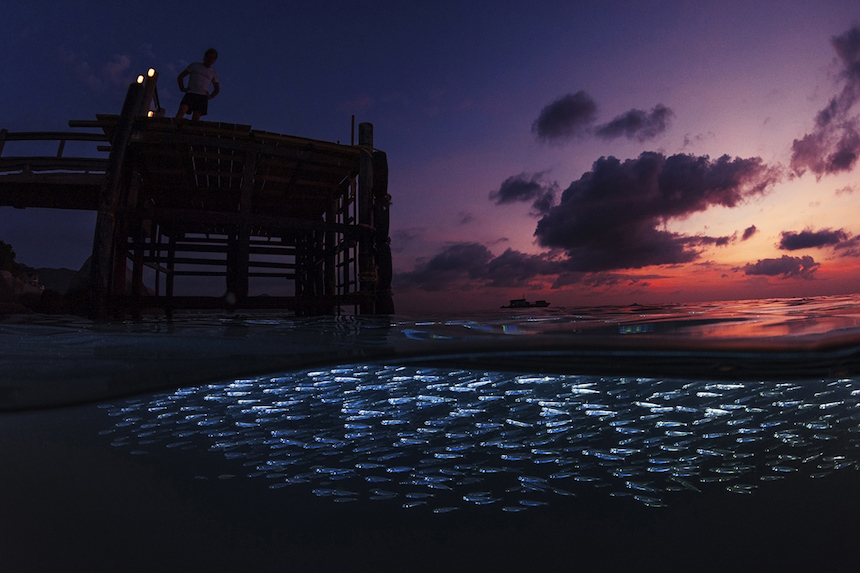 Medusas fluorescentes