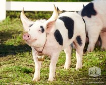 Moink
