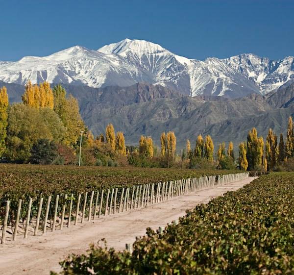 Las Compuertas, Uco Valley, Mendoza.