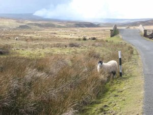 Photo: Oliver Dixon. http://www.geograph.org.uk/photo/365349 Creative Commons Attribution-Share Alike 2.0 Generic license.