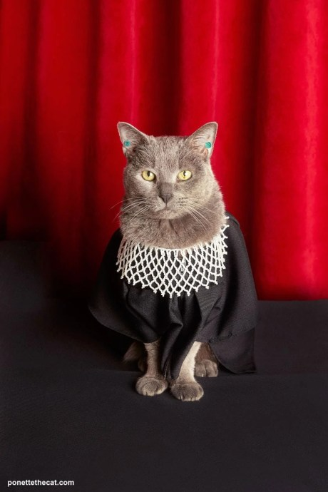 Here is Ponette the Cat dressed as Ruth Bader Ginsburg.