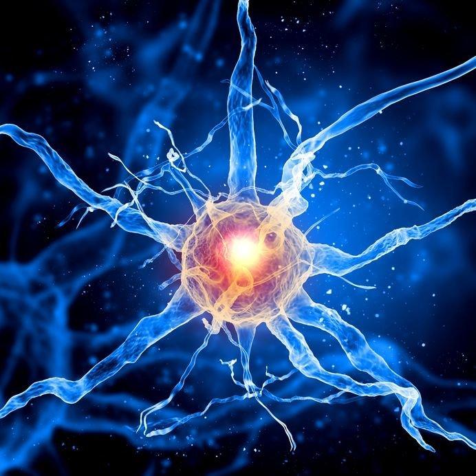 Jfk Quote Wallpaper Lion S Mane Mushroom Unparalleled Benefits For Your Brain