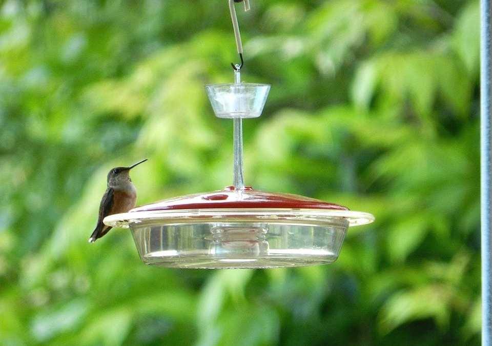 """""""SWEET HUMMINGBIRD"""""""