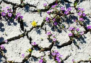 flowers-in-concrete-copy