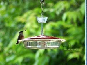 WM-Hummingbird2