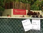coconutgroveartfestival21410-118