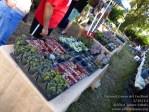 140215 Coconut Grove Art Festival_00107