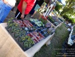 140215 Coconut Grove Art Festival_00107