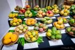 Mango-Festival-32