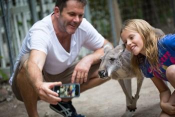 Australian-red-kangaroo-Credit-Jungle-Island