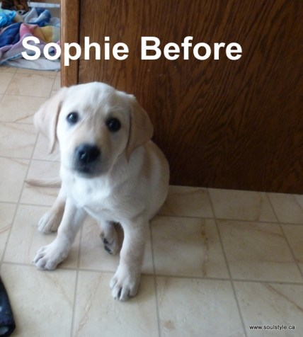 Sophie Before