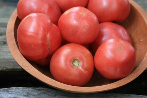 Medium Of Arkansas Traveler Tomato