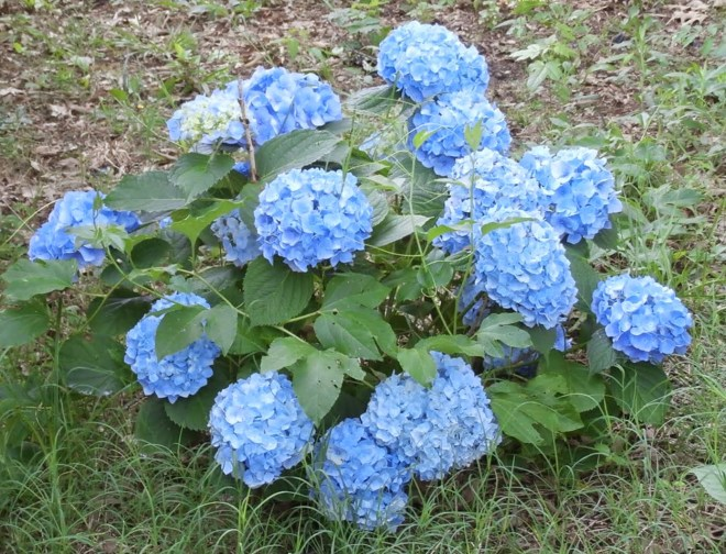 western tennessee gardening flowering plants