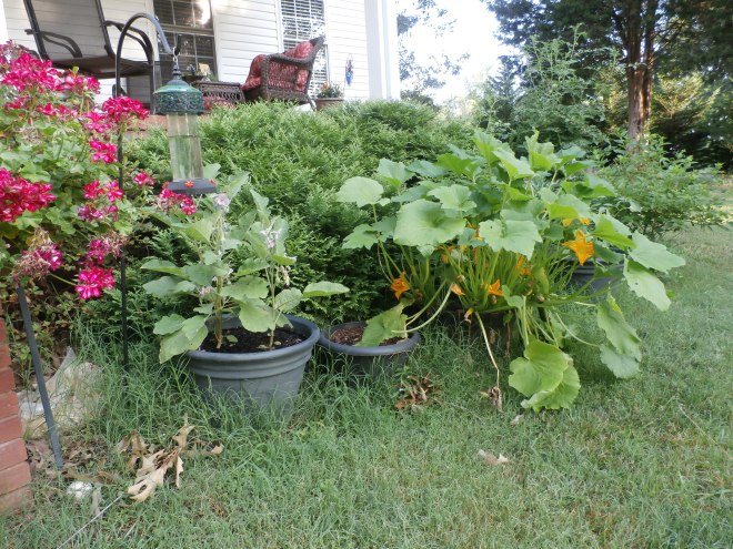 MiracleGro your garden for high yields and best results.