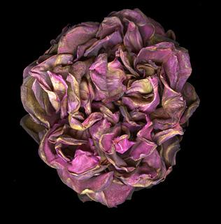 Works_Rose