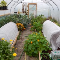 October in the Polytunnel