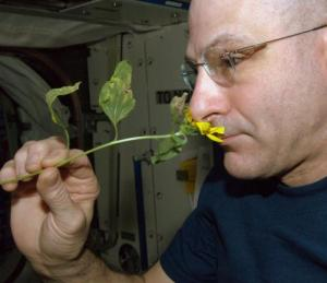 'Diary of a Space Zucchini', a poignant account of the life of a zucchini was kept by astronaut Don Pettit as it grew on board the International Space Station. (Credits: NASA)
