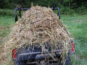 A load of hay