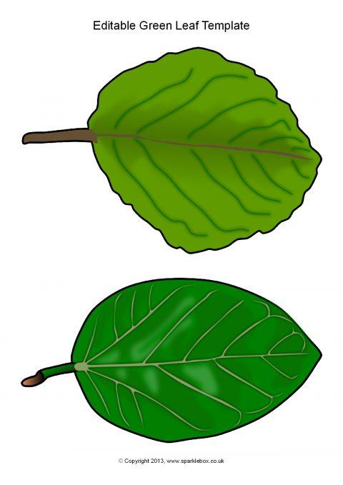 Editable Green Leaf Templates (SB10010) - SparkleBox