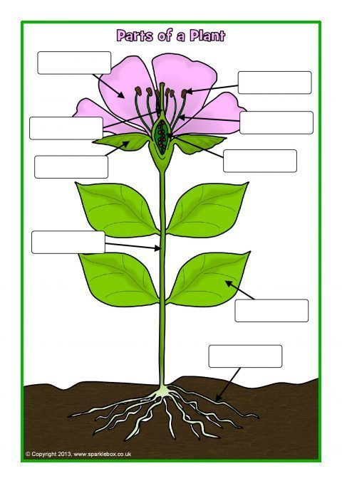 labelled diagram of plant