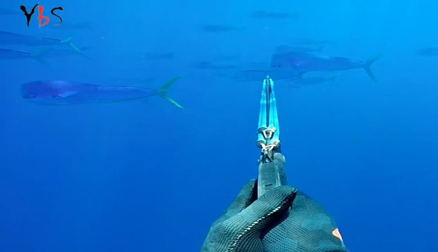 Hd Great White Shark Wallpaper Spearfishing And Fun In Western Australia By Ybs