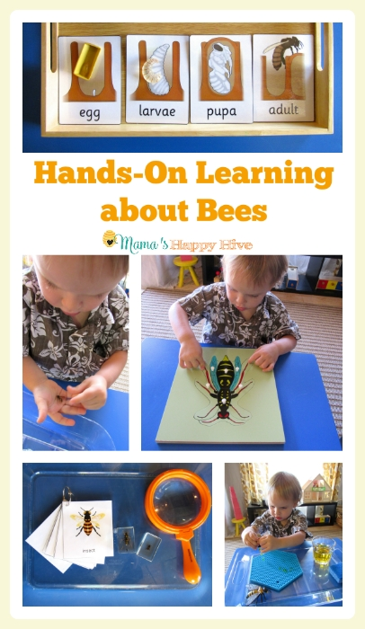 Hands-on learning about bees. Featured by Special Learning House. www.speciallearninghouse.com.
