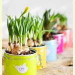 Interesting & unusual planters : gardening fun with children with special needs