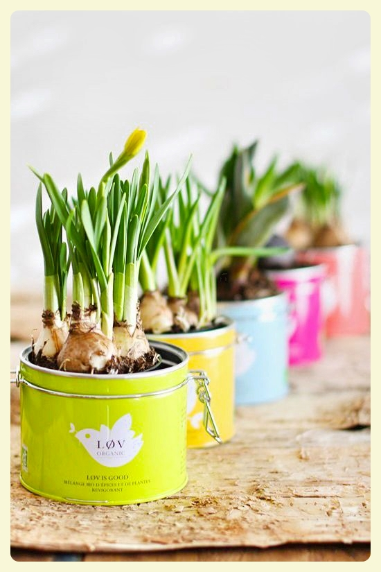 Planting in tea tins. Featured by Special Learning House. www.speciallearninghouse.com..jpg