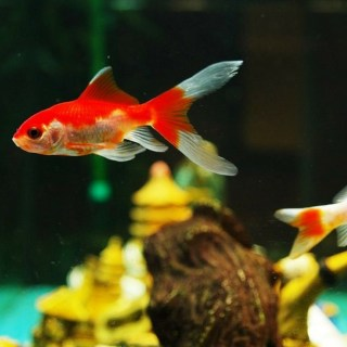 Why you should buy an aquarium for your child with autism