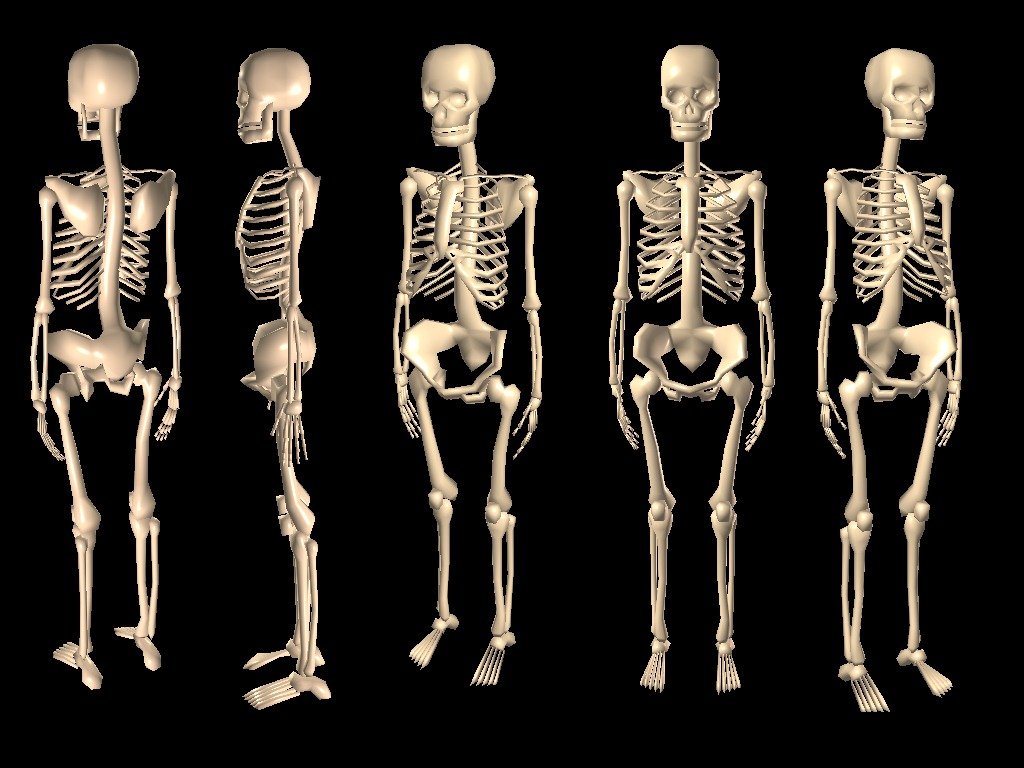 Wallpaper Seram 3d Our Bones Are Weaker Than They Used To Be Long Ago Study