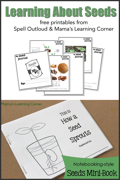 Free Studying Seeds Unit with Printable Mini-Book, Seed Chart, and