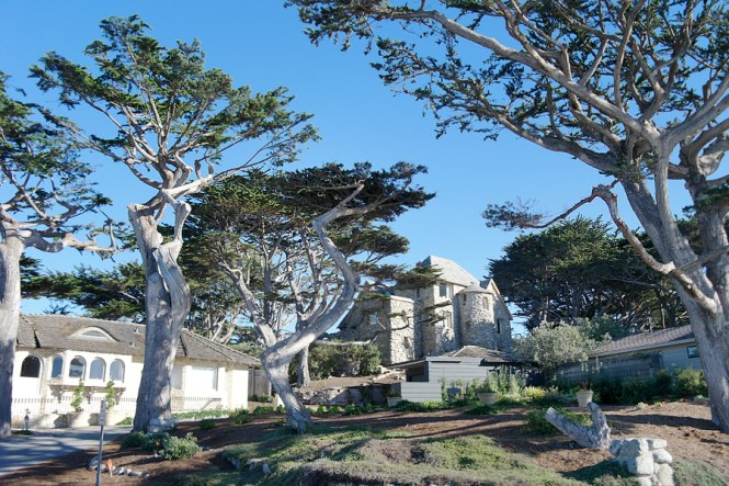 Trees-and-a-Carmel-Castle